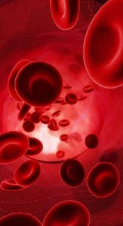 prime male red blood cells